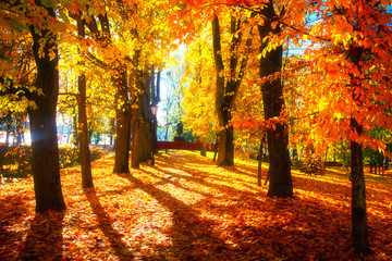 Aluminium Prints Autumn Autumn scene. Bright colorful landscape yellow trees in autumn park. Fall