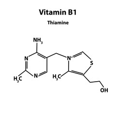 Vitamin B1. Thiamine Molecular chemical formula. Infographics. Vector illustration on isolated background.