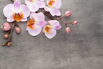 Tuinposter Orchidee Spa orchid theme objects on grey background.