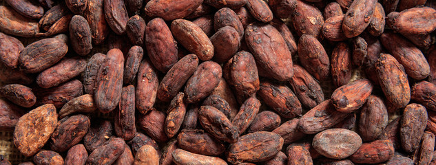 Cocoa beans full frame background, banner. Close up view