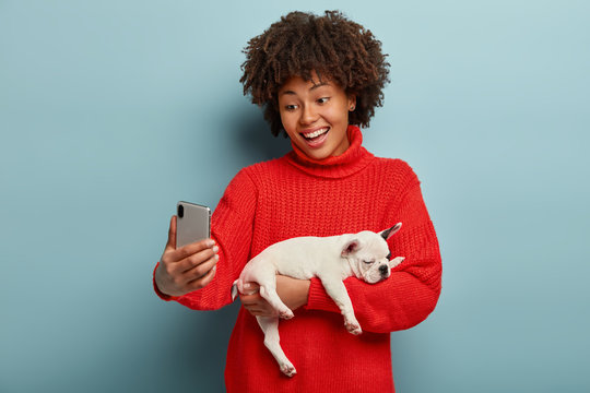 Positive dark skinned woman laughs happily, poses at mobile phone camera, makes selfie holds pedigree small dog, wears red jumper, has fun with pet, curly hair, stands against blue studio wall