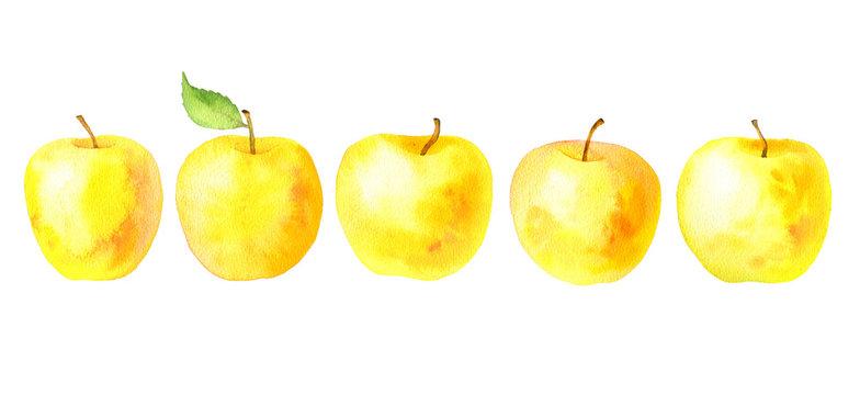 watercolor drawing yellow apples