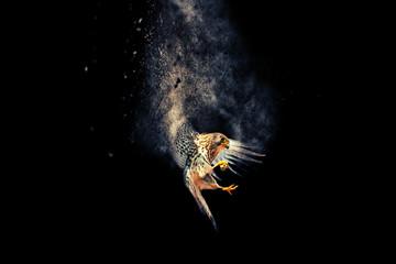 Flying bird. Bird of prey. Dispersion, splatter effect. Black background.