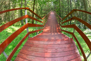 Wooden bridge over a ravine in a forest on a summer day
