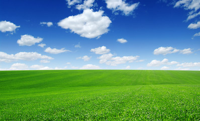 Fotomurales - green field and blue sky