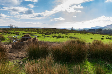 A springtime image of a circular sheep feeder in a field in Lancashire, England
