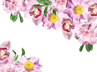 Fototapete - Beautiful floral background of peonies and orchids. Isolated