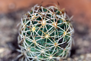 Close Up of Cactus Succulent Plant Macro Abstract