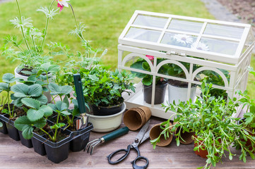 Variation of plants and flower pots with gardening tools