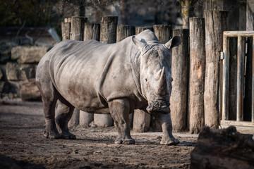 Nashorn, tier, säugetier, wild lebende tiere, tierpark, -hörner