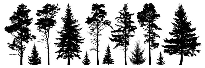 Forest evergreen trees silhouette isolated set