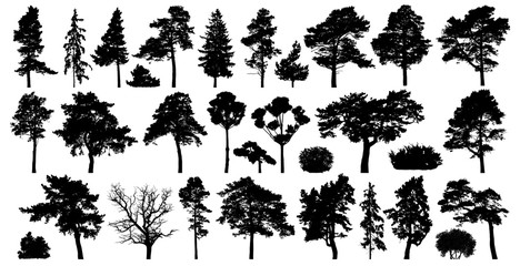Trees set isolated on white background. Coniferous forest silhouette