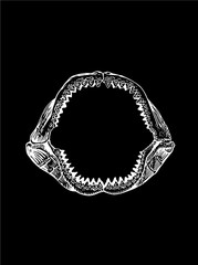 Megalodon Jaw, shark jaw isolated on black background,vector sketch