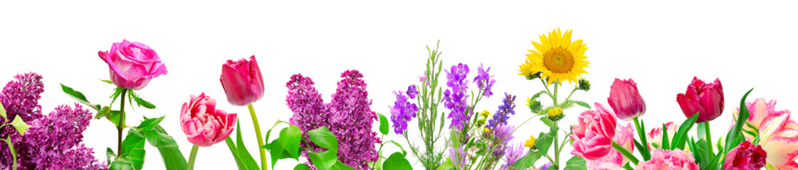 Panorama different flowers isolated on white