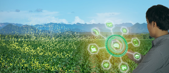 Wall Mural - iot smart farming, agriculture in industry 4.0 technology with artificial intelligence and machine learning concept. it help to improve, categorized, specified goal, solve problem, keep goal, predict