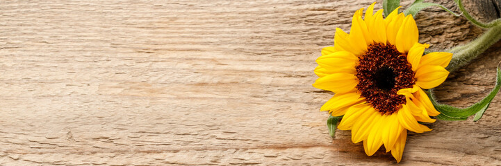 Single sunflower on wooden background Wall mural