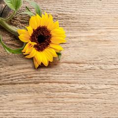 Fototapete - Single sunflower on wooden background