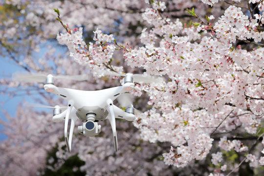 ドローン 桜