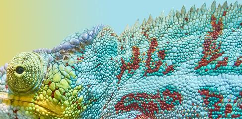 Animal chameleon, color game.
