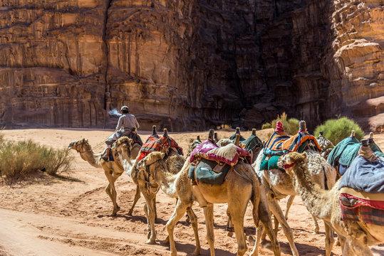 Caravan of camels in Wadi Rum, Jordan