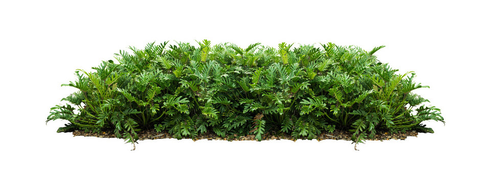plant bush tree isolated with clipping path