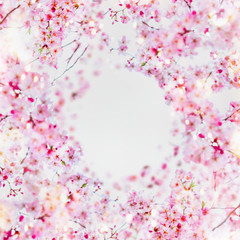 Wall Mural - Beautiful spring blossom frame background. Round circle frame with pink blossom on white. Springtime nature, selective focus. Cherry blossom