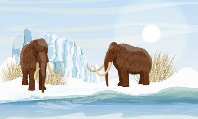 Two large woolly mammoth. Snow and glacier. Dry frozen grass by the sea. Prehistory animals. Ice Age. Extinct animals of Siberia, Eurasia and North America. Realistic Vector Landscape