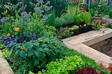 Fototapeta  Vegetable garden growing in raised enclosed beds with vegetables and flowers obraz