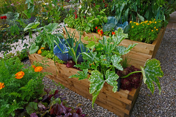 Wall Murals Garden Raised vegetable container with selection of vegetables and flowers in an allotment garden