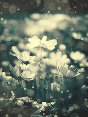 Wall Mural - Cosmos flowers and light bokeh in vintage tone background.