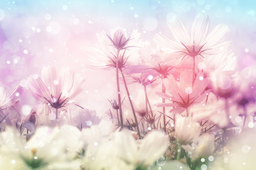 Wall Mural - Cosmos flowers in bokeh texture soft blur for background with pastel sttyle.