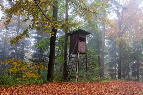 Hochsitz im Herbst