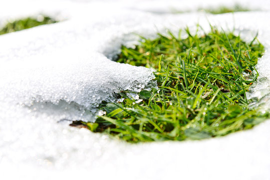 Spring time concept - melting snow and growing green grass on a sunny day in close-up