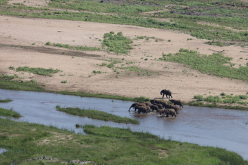 Door stickers Elephant Afrikanischer Elefant im Olifants River / African elephant in Olifants River / Loxodonta africana