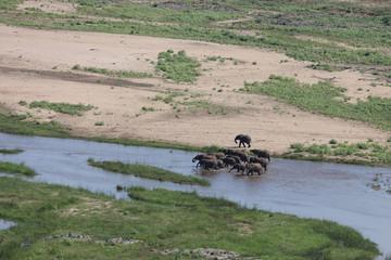 Fototapeten Elefant Afrikanischer Elefant im Olifants River / African elephant in Olifants River / Loxodonta africana
