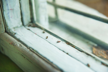 The texture of an old wooden window. Dead insects lie on the window. Old house in Tbilisi. Dead bugs on the white background of the window.