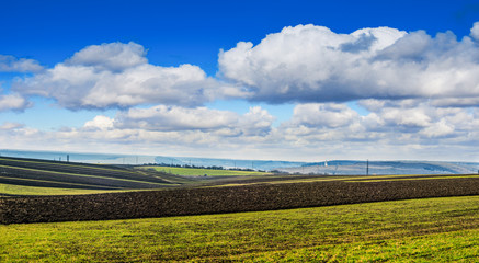 Wall Mural - panoramic view of lines of young corn shoots on big field with clouds sky