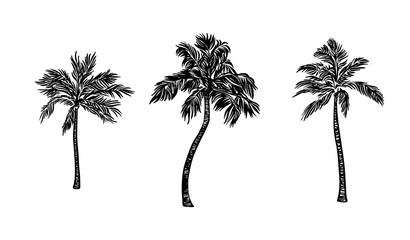 Hand drawn palm tree set. Vector black ink drawing isolated on white background. Graphic illustration