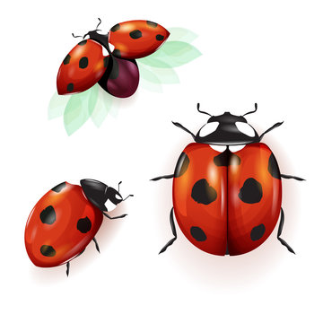 Ladybird illustration. Set of three ladybirds isolated on white. Can be used in different ways of design, appearance, cover, etc. Vector - stock.
