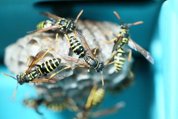 Wespen sind beim Nestbau