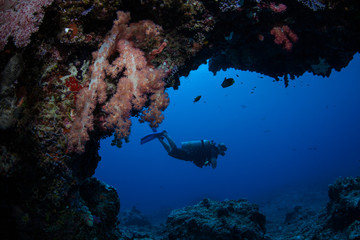 A scuba diver explores a deep cavern on a healthy reef in Palau. This tropical island-nation is home to extraordinary marine biodiversity.