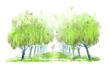Deciduous tree alley and deer. Spring landscape. Watercolor hand drawn illustration.