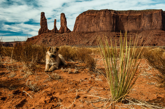 A wild puppy dog patiently poses against the southern backdrop of the barren American western desert full of dry brush and rocky canyon wall buttes