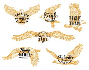 Eagle, hawk or falcon birds with letterings