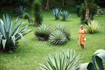Woman Walk on Landscape Green Field Among Agaves
