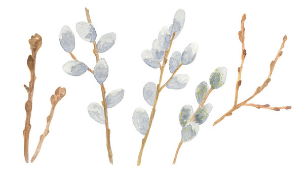 Set of handdrawn watercolor pussy-willow branches, springtime flowers and trees, isolated objects on the white background, floral clipart illustration for any design purposes
