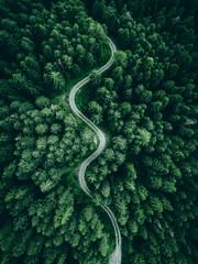 Fototapeta aerial view of a forest obraz