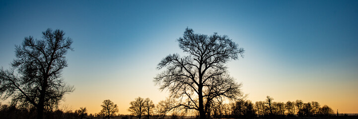 silhouettes of trees against the evening sky. Web banner. Winter season. Wall mural