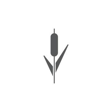Reeds plant vector icon isolated on white background