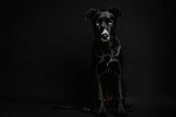 Moody image of a black puppy in a black background